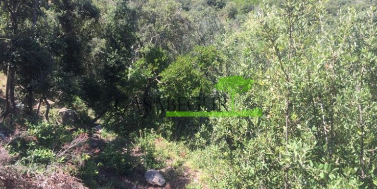 ref-1164-sale-plot-sa-riera-sea-views-costa-brava-casabegur-2